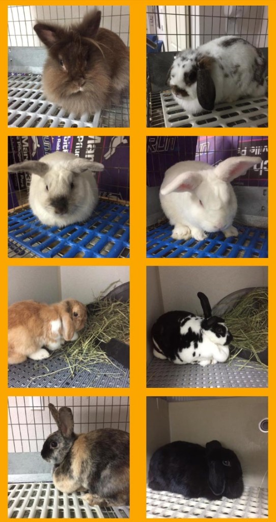 25 New Intake Rabbits