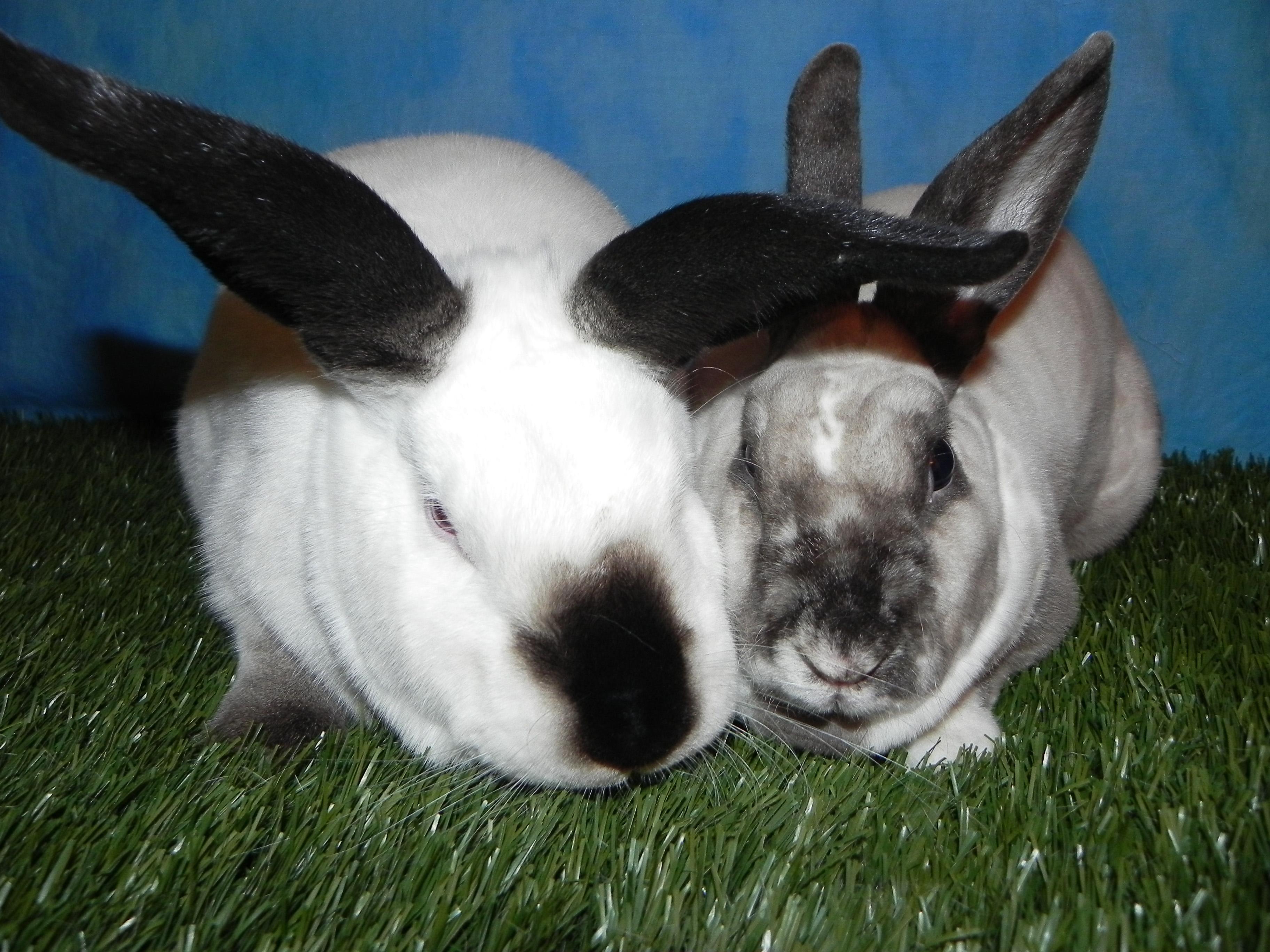 Alfie and Qtip