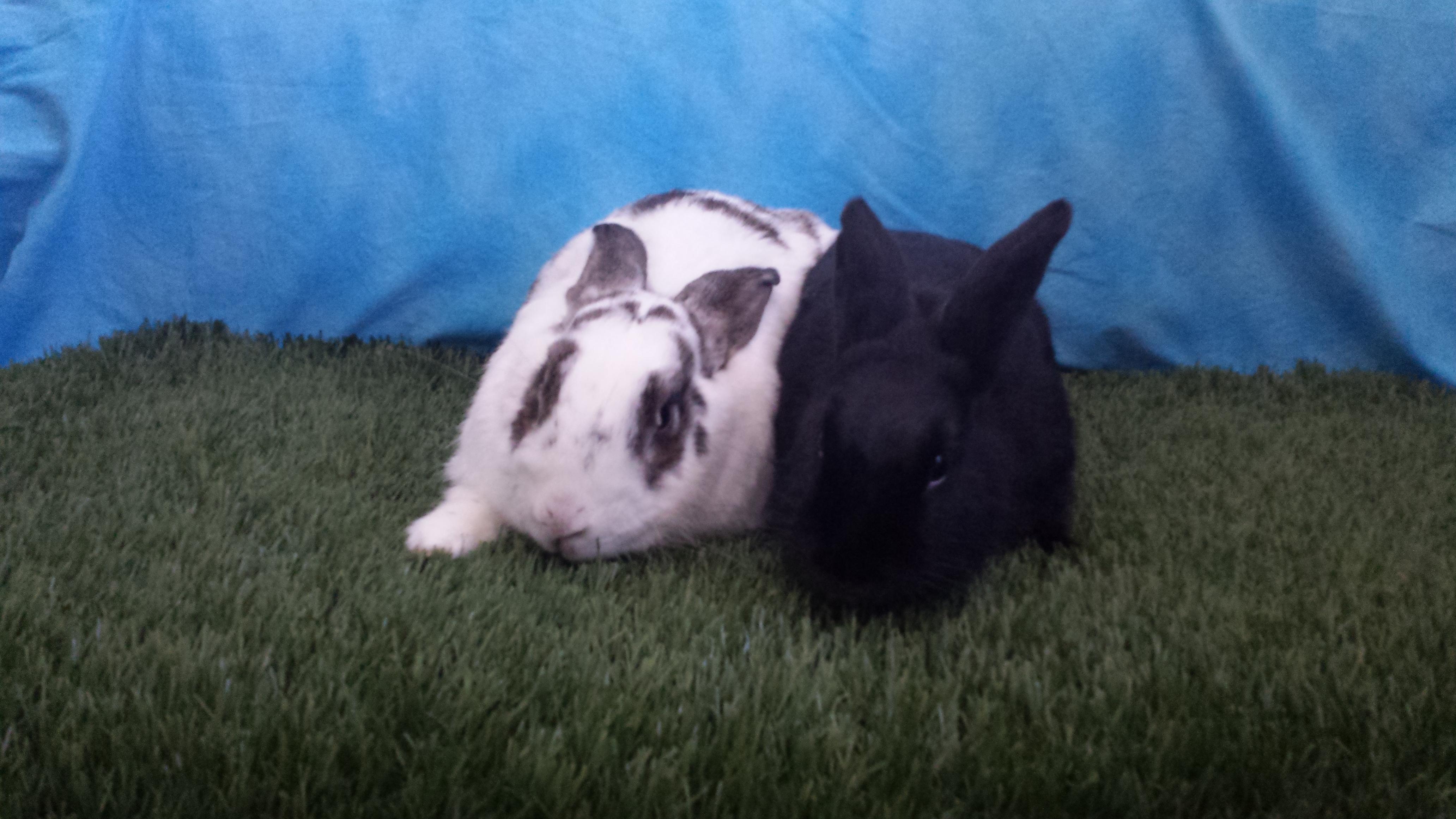 Bevo and Bonita