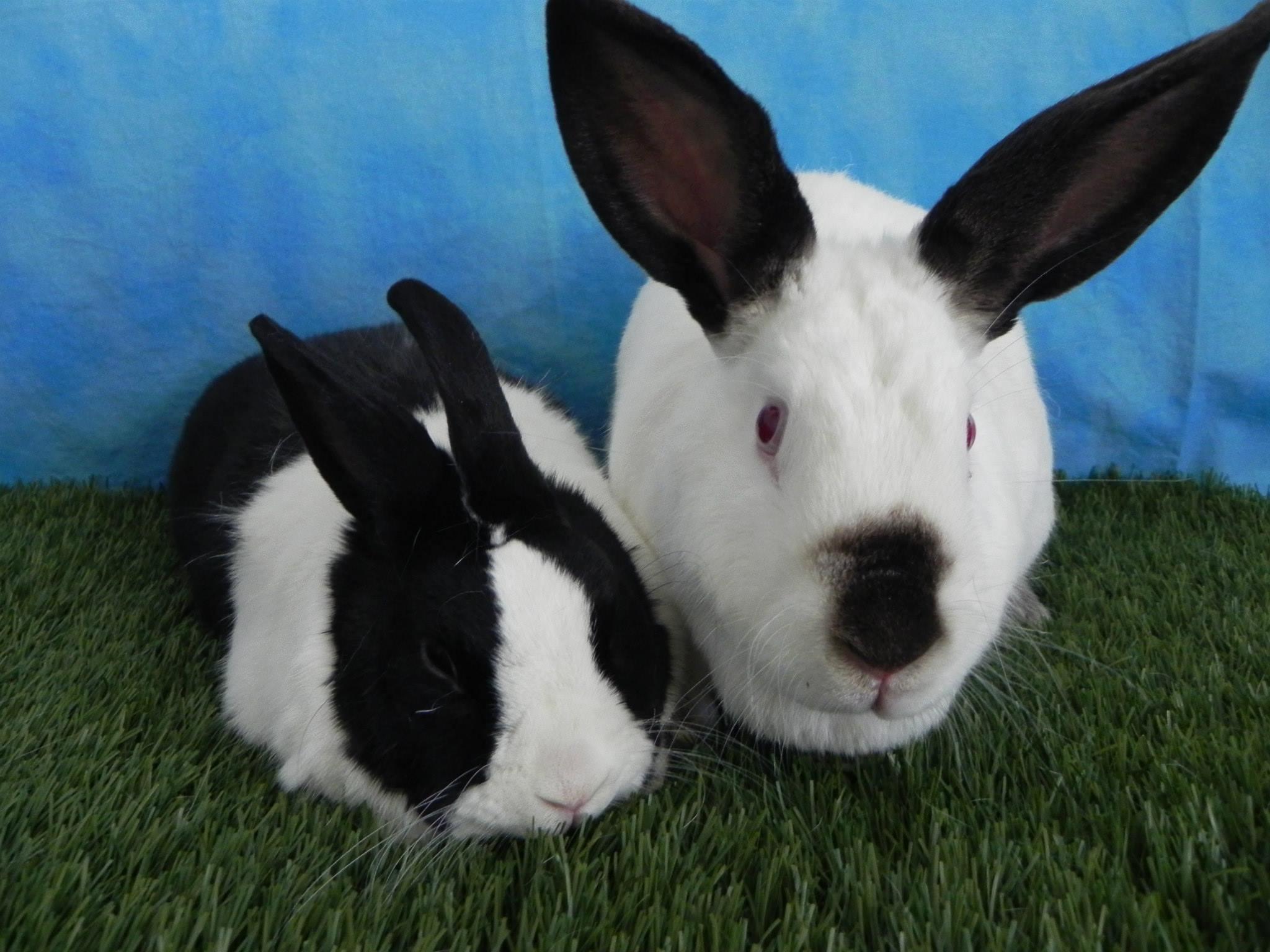 Carly and Bun Bun