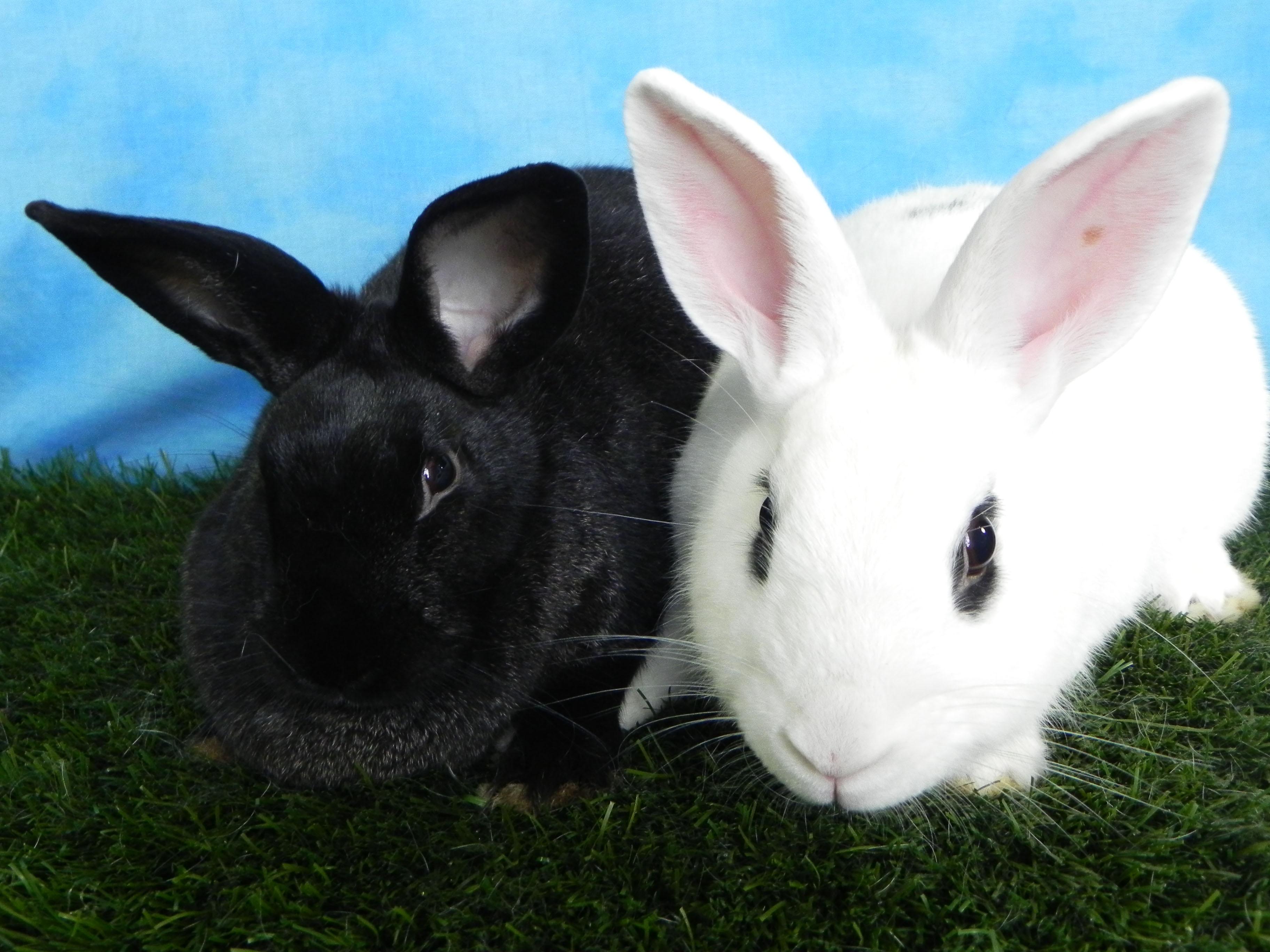 Casper and Chloe