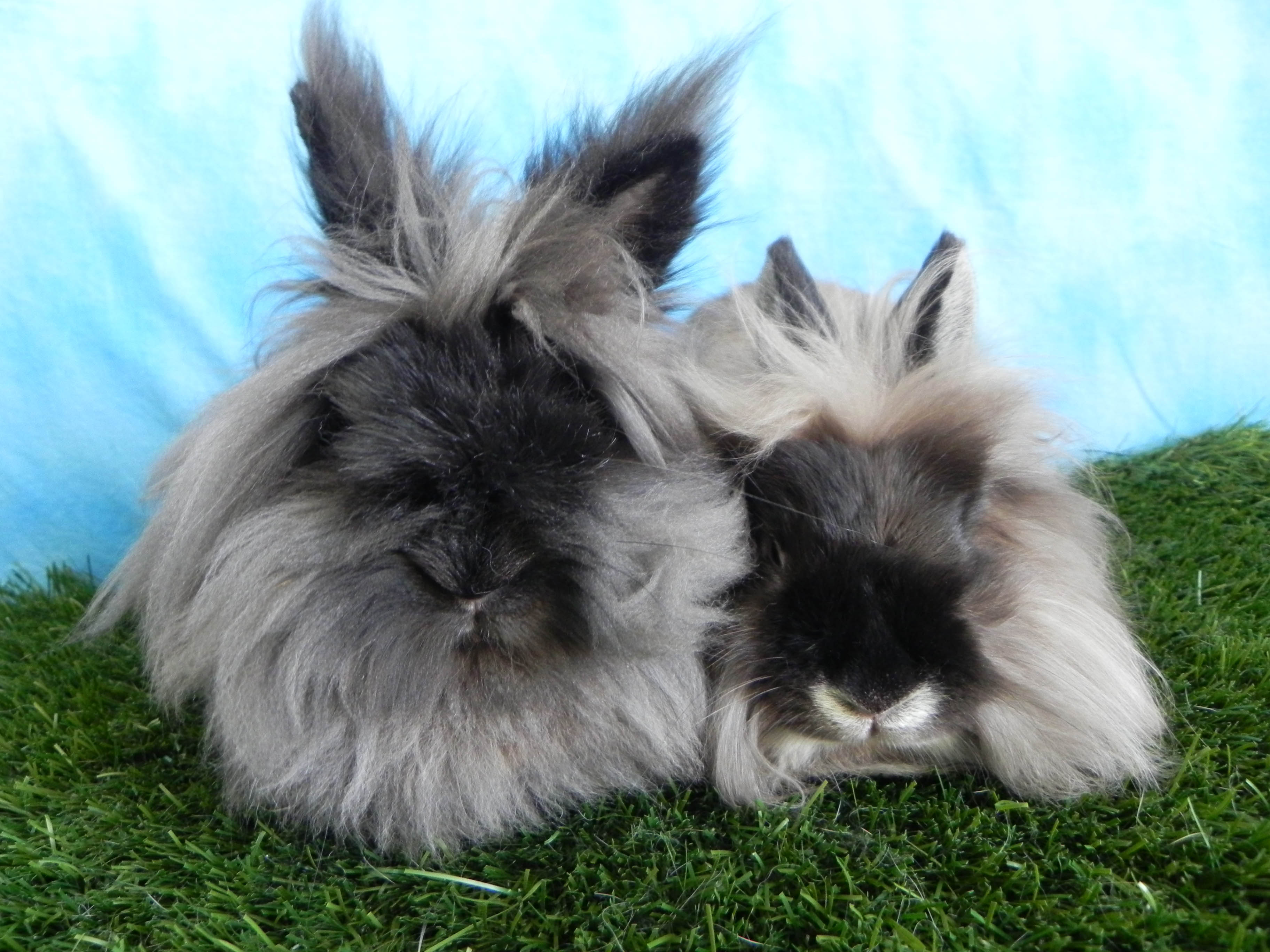 Chaz and Basil
