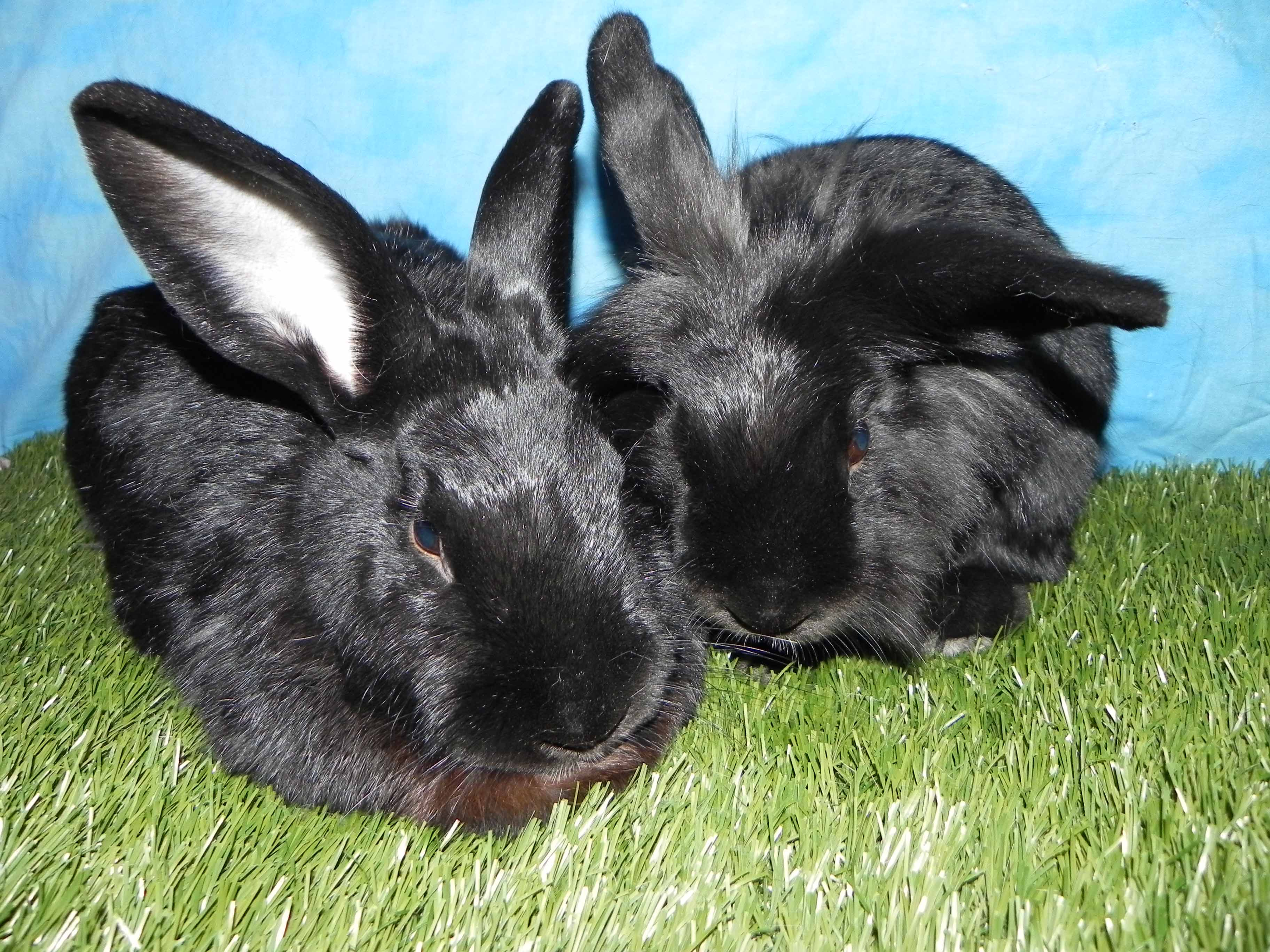 Elliot and Half-a-lop