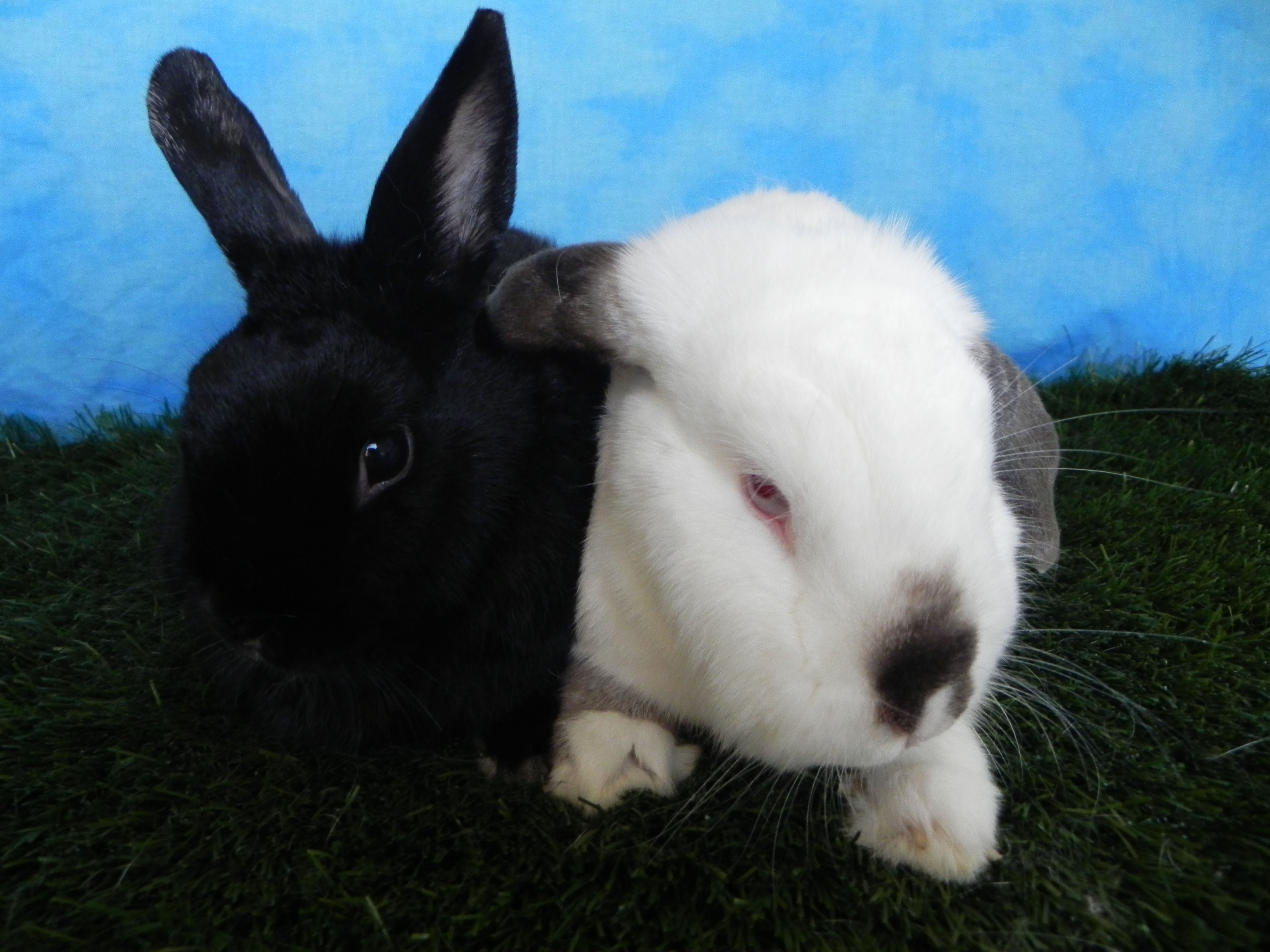 Harvey and Flopsy