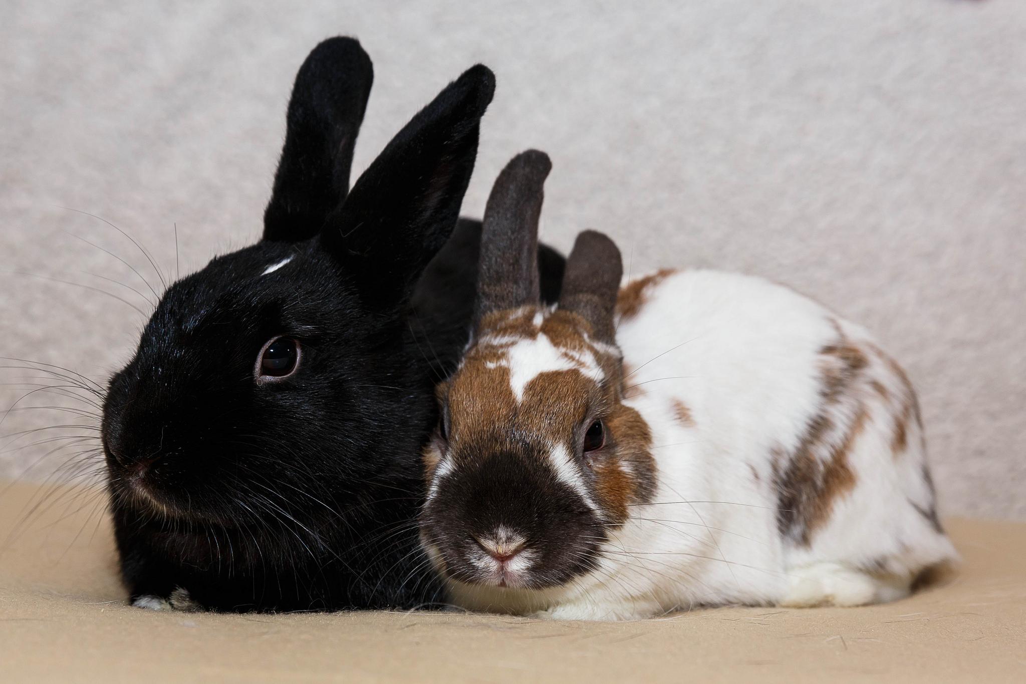 Gumdrop and Mr Bunny