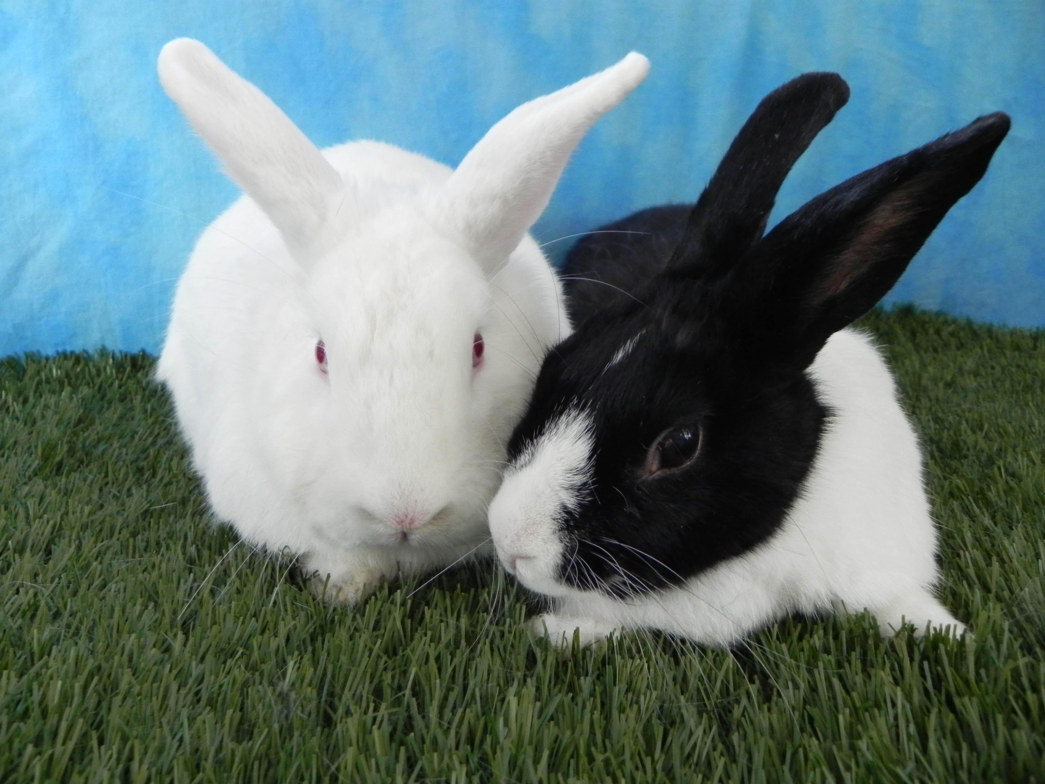 Gus and Jasmine