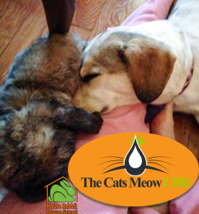 The Cats Meow CBD: Dwiggins (rabbit) and Mia (dog)