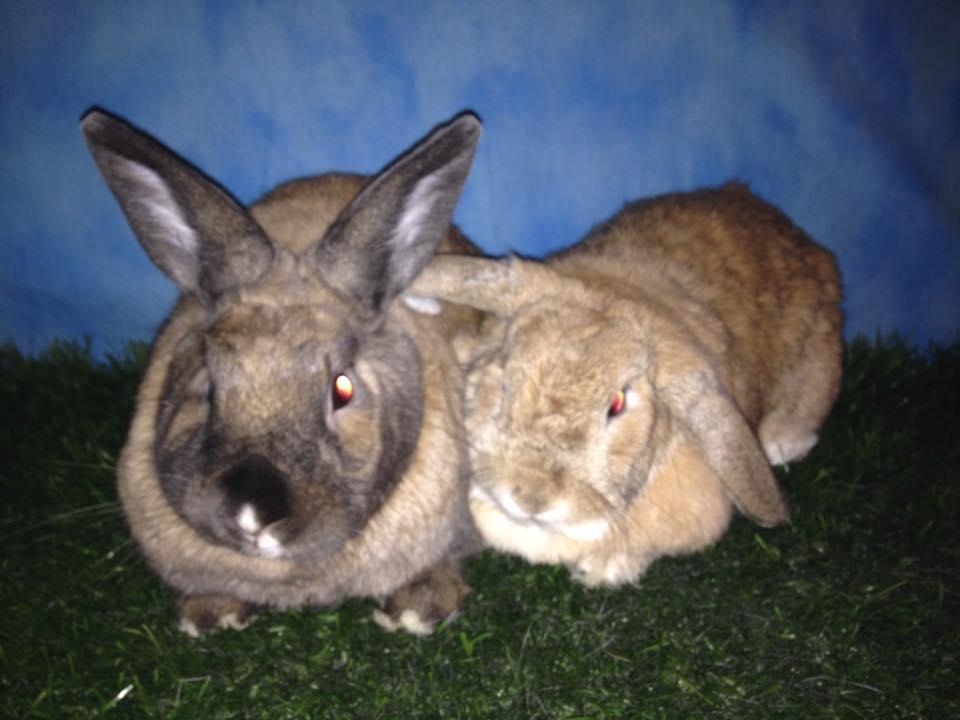 Malibu and Abby