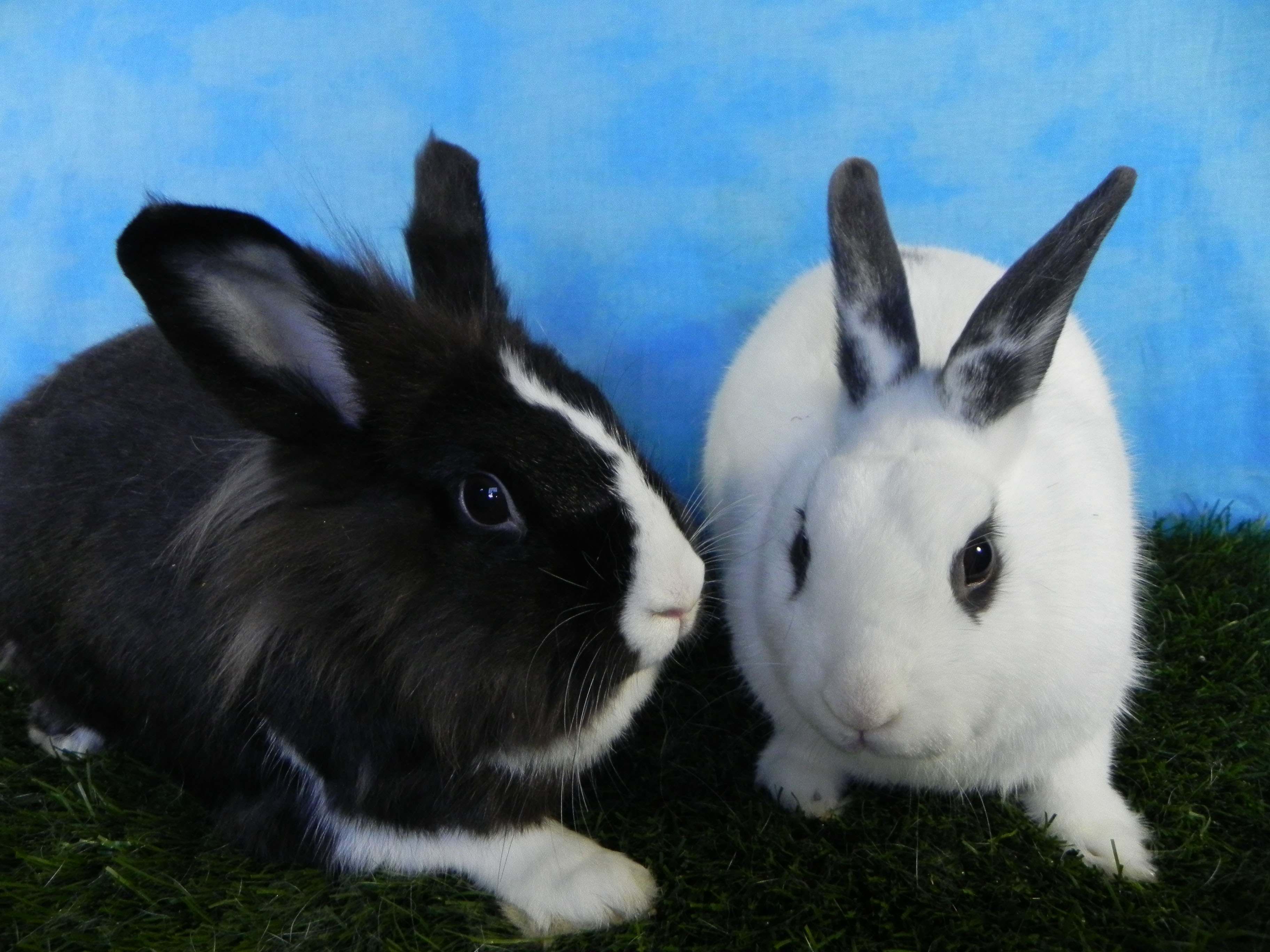 Mercedes and Beau Bunny