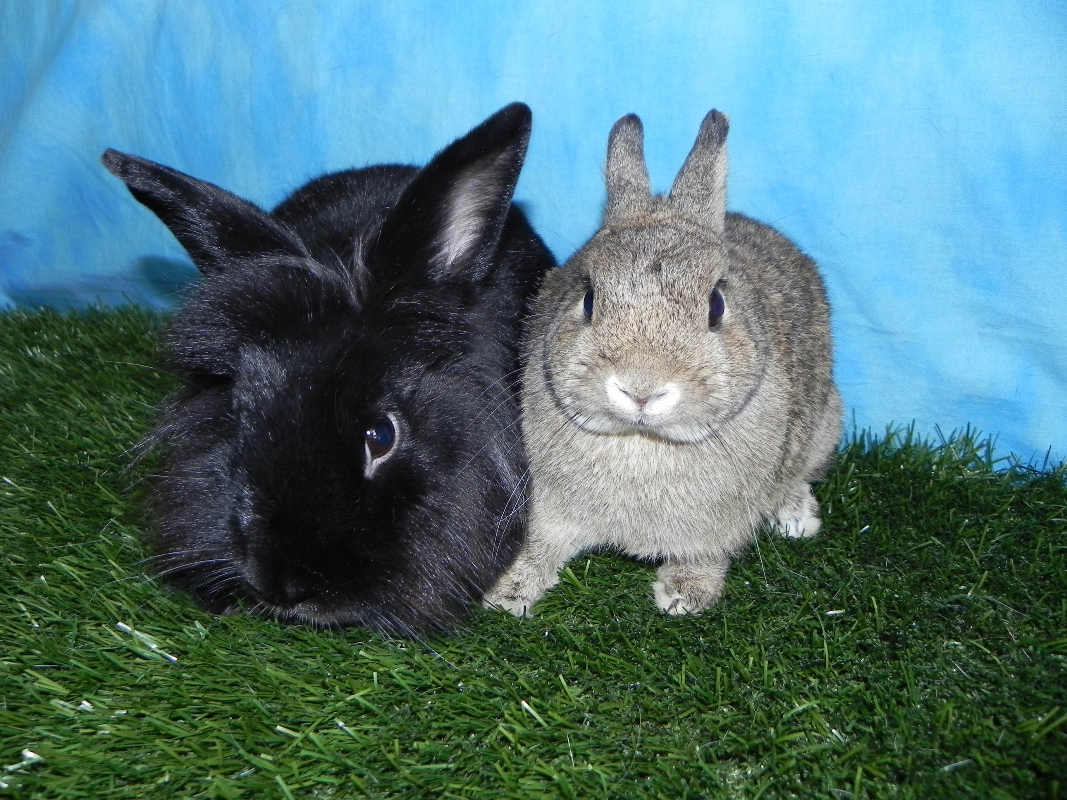 Sharpie and Millie