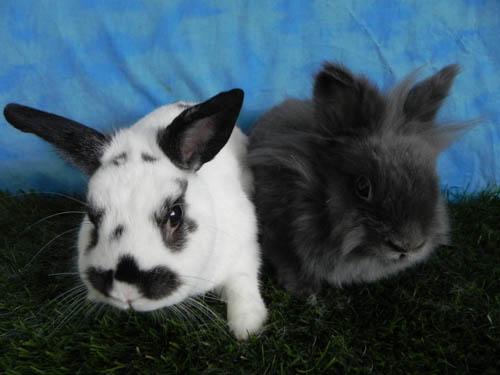 Sparkey and Edie