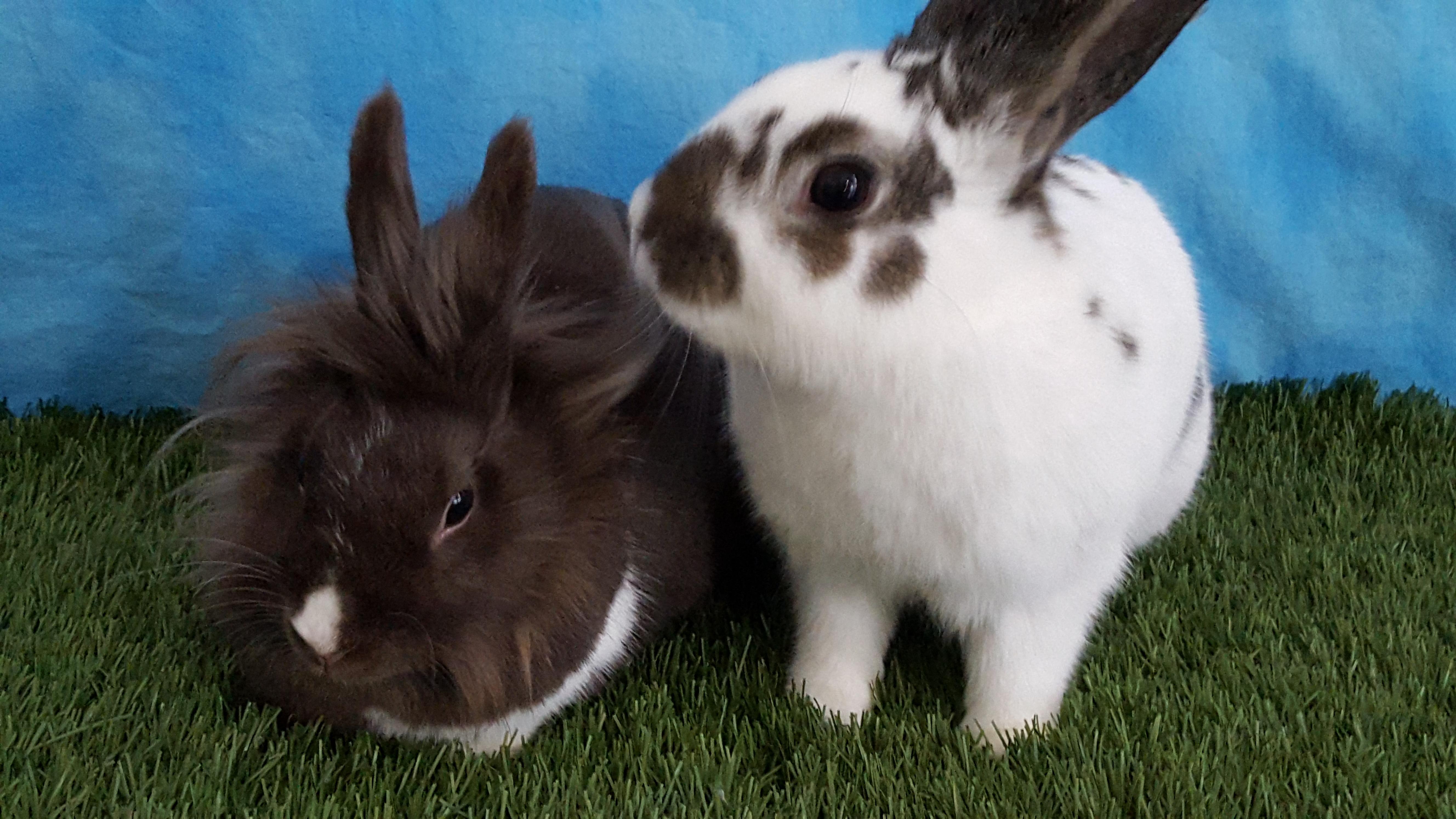 Thumper and Yukiko