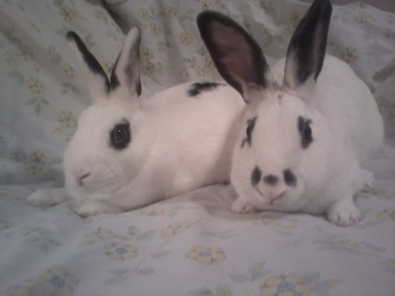 Zippy and Arriba