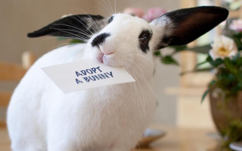 Adopt a Bunny
