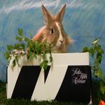 saks bunny