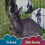7th Annual Rabbit Roundup