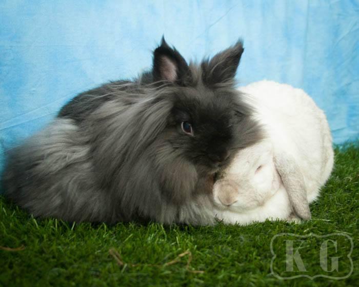 Tutu paired with Beatrix