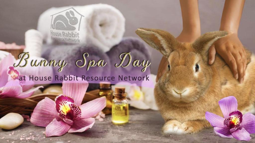 Bunny Spa Day